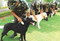 Canines To The Rescue: Indian Army To Deploy Dogs To Detect Covid-19