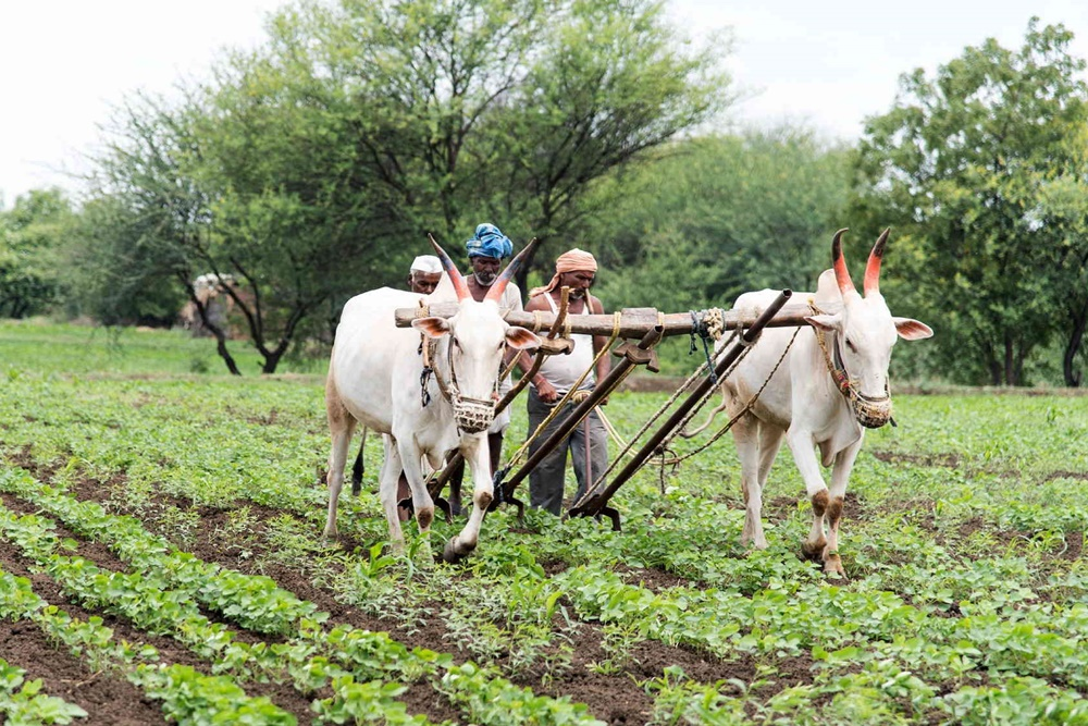 CSR Spending In Agriculture Far Less Than Other Sectors: Study