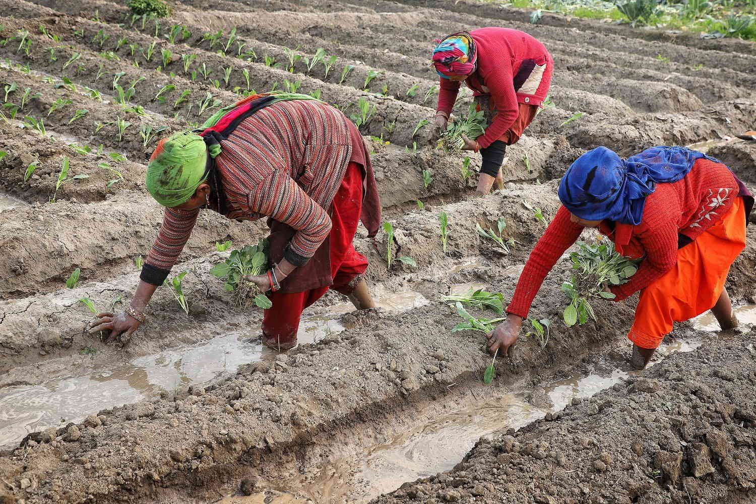 Women Farmers Being Denied Their Due: Activists