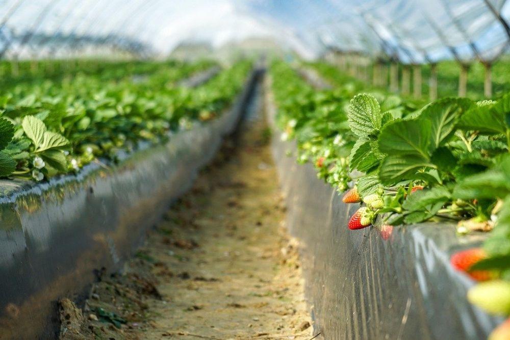 Women Farmers In Georgia Break Into Male-Dominated Agri Sector