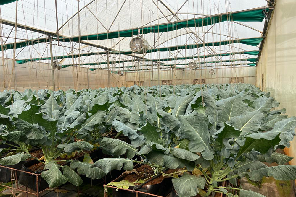 Gujarat Government Boost For Hydroponic Farming In Cities