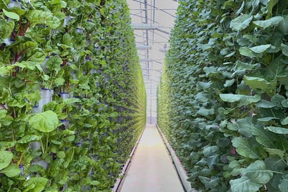 This New Greenhouse Is Expected To Break New Ground