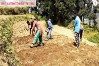 How Uttarakhand Rajma Growers Benefit Using This Method