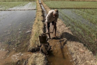 Nitish Kumar's Govt Scrapped APMC Act 14 Years Ago But Farmers In Bihar Still Languishing