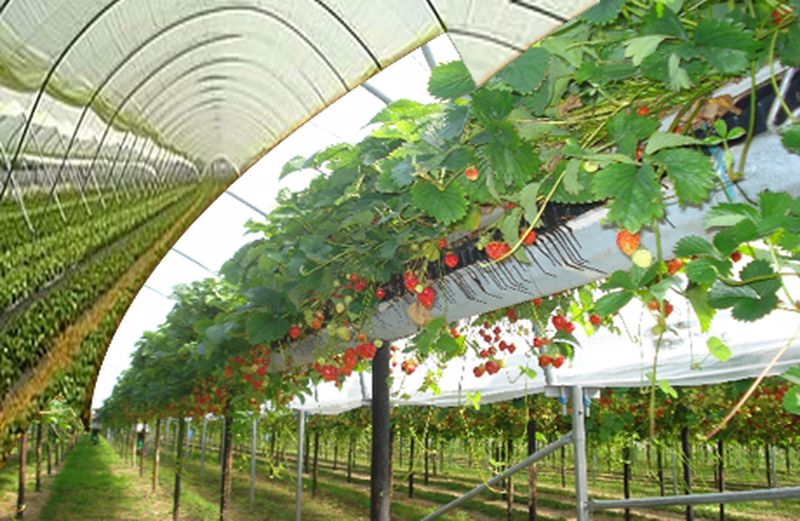 Can This Method Be A Step Towards Food Security