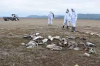 Death Of 27 Migratory Birds Leads To Bird Flu Scare In Himachal Pradesh