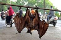 WHO Says Covid Most Likely Transmitted To Humans From Bats, Rules Out Wuhan Lab Leak