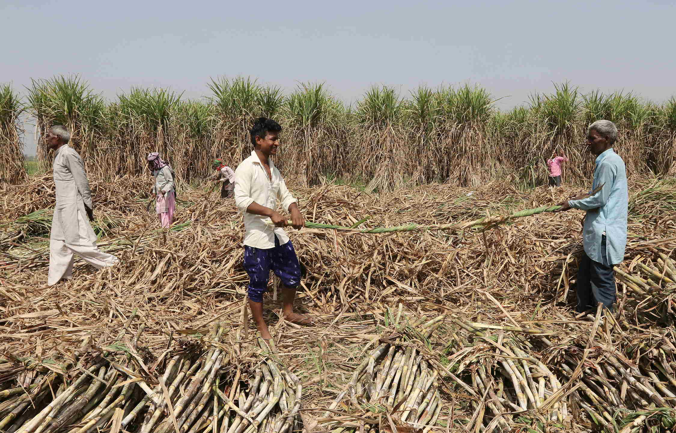 Sugar Output Up 20% Till Feb, But Ex-Mill Prices Down: ISMA