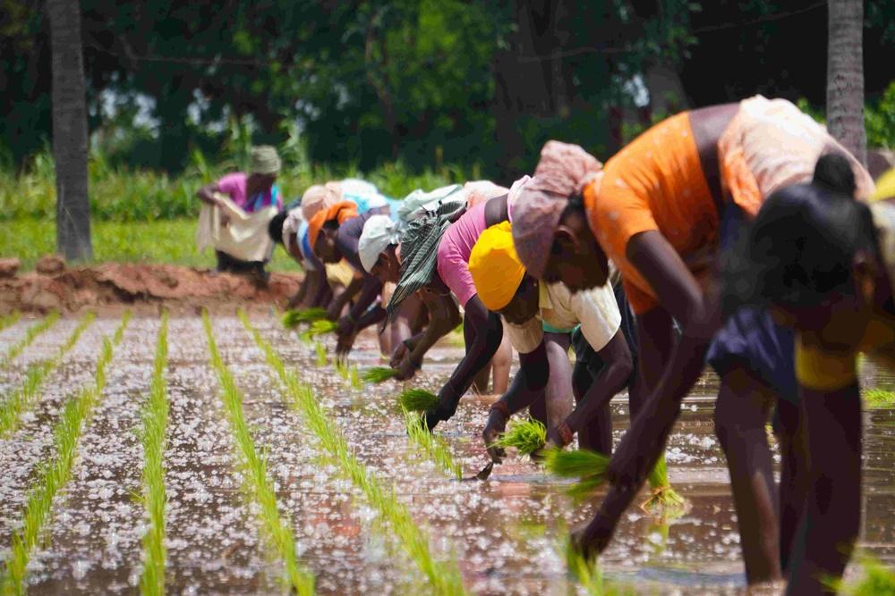 Study Says Women Farmers Can Increase Yield 20-30%: UN Body