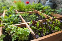 Planning  A Kitchen Garden? Here's A Primer For You