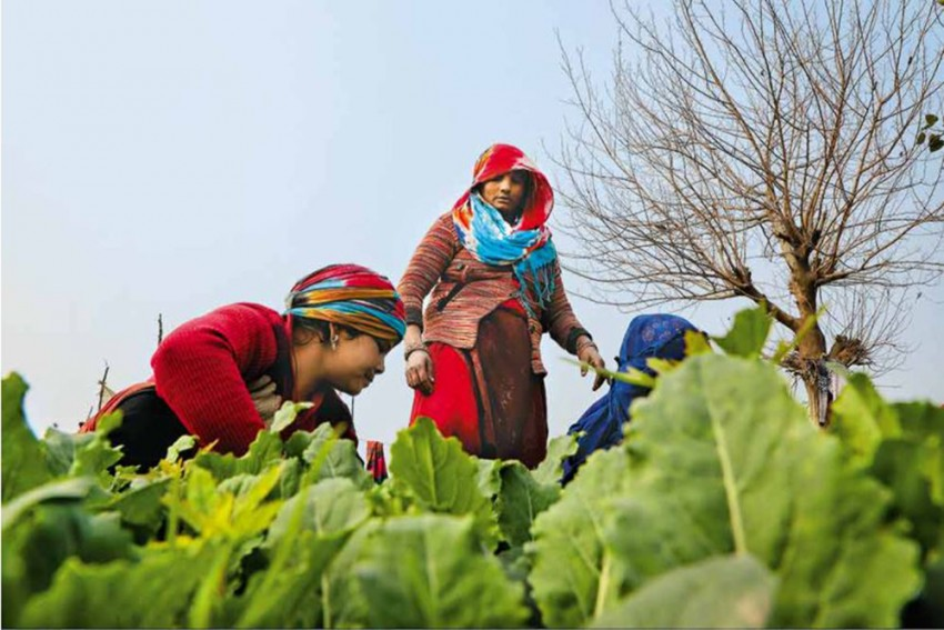 Women's Day: Think Farmers, Think Men. But 40,000 Women Farmers Would Beg To Differ