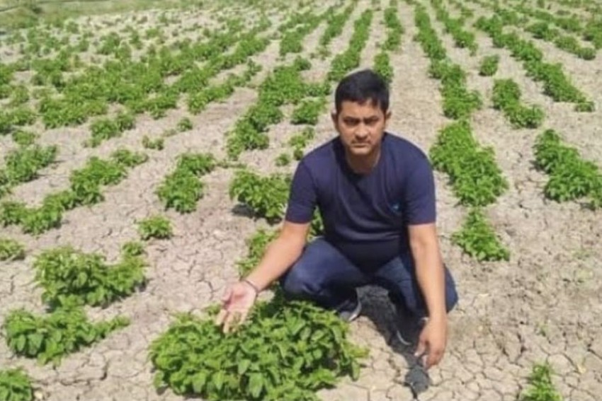 Vegetable For 1 Lakh Per Kilo? This Bihar Farmer Is Growing World's Costliest Crop