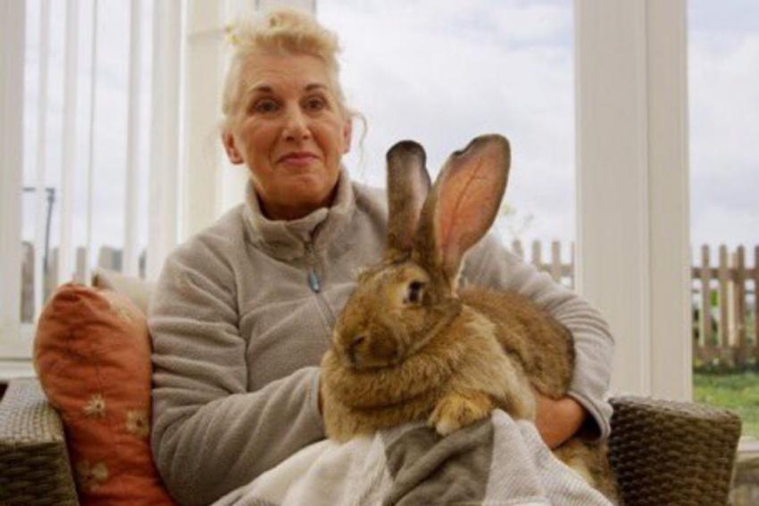 UK: World's Longest Rabbit Stolen, Owner Offers Rs 2 Lakh Reward For Information