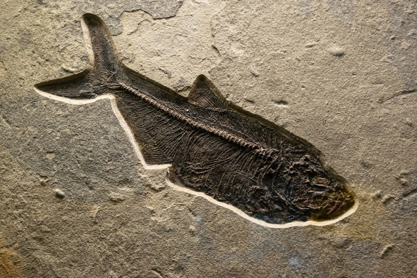 New Mexico: Scientists Unearth 300-Million-Year-Old 'Godzilla' Shark Fossil