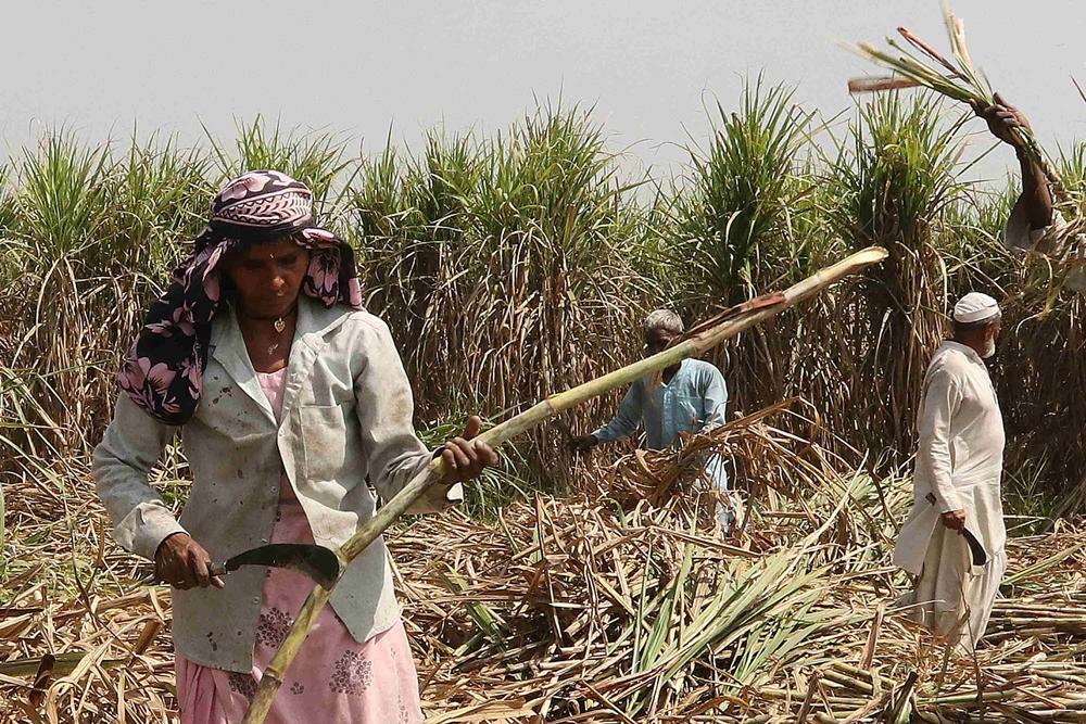 Rabi Crop Harvesting On Schedule Despite COVID-19: Ministry