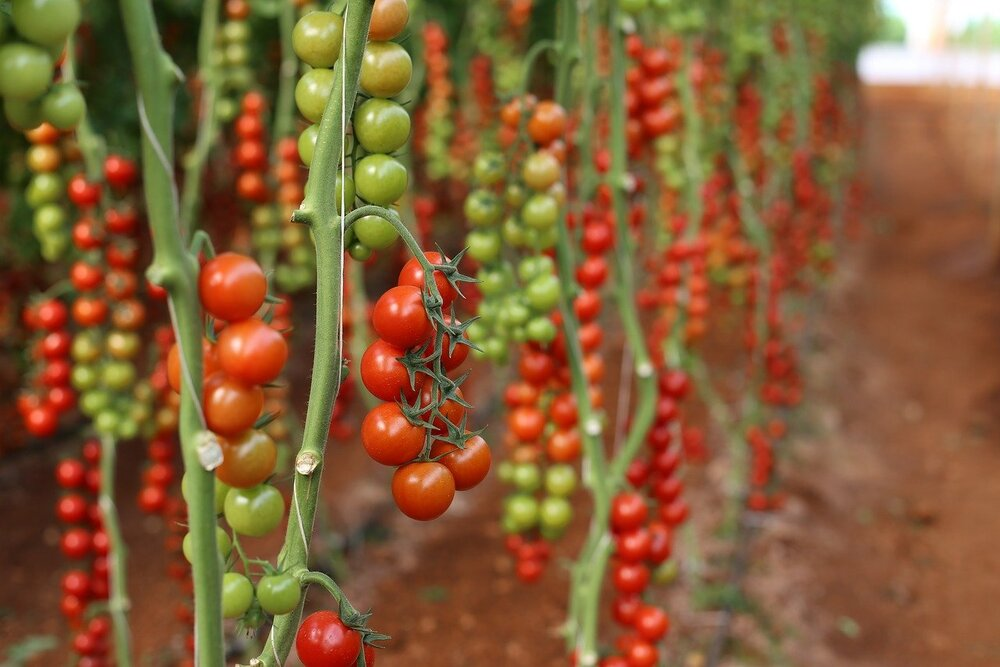 A Little Coating May Keep Agri Produce Healthy