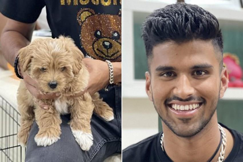 Washington Sundar Names His Dog After Gabba Cricket Stadium In Australia, Writes 'Love Is A Four-legged Word'