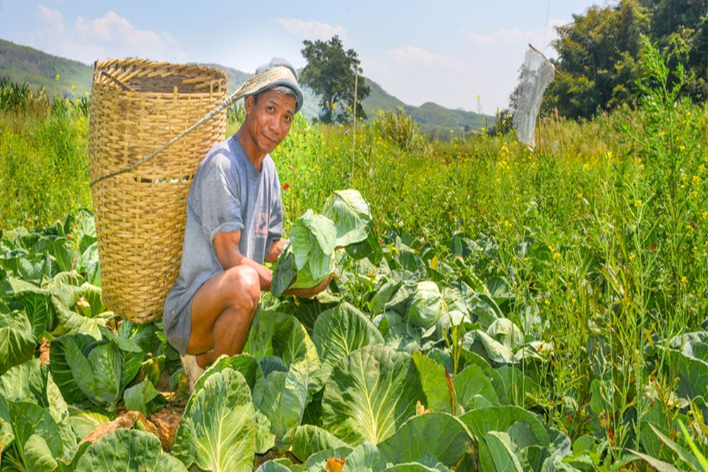 How Arunachal, Mizoram Farmers Increased Yield