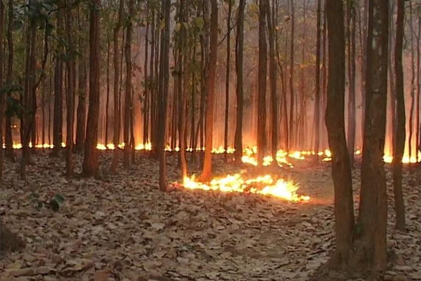Himachal Pradesh Gears Up After Forest Fires In Uttarakhand