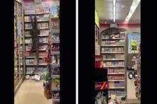 6-Foot Monitor Lizard Enters Thailand Supermarket, Climbs Up Shelves | Watch Video Here