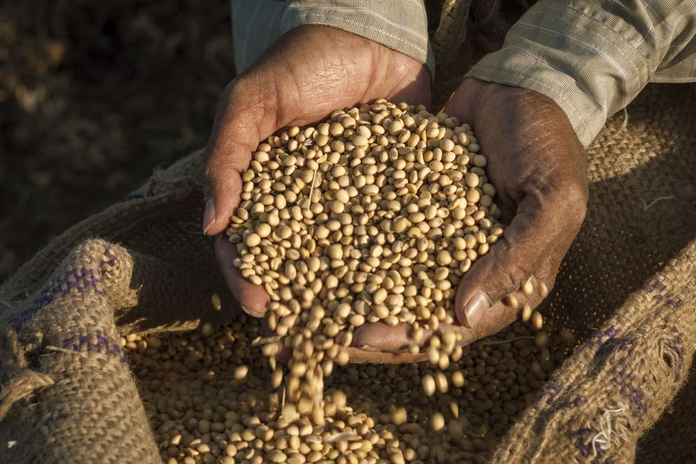 Asia Pacific Fastest Growing Region In Seeds Market: Report