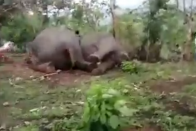 18 Elephants Die As Lightning Strikes In Assam's Nagaon