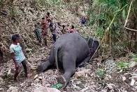 Suspicion Of Poisoning Rife After 18 Elephants Die In Assam's Nagaon