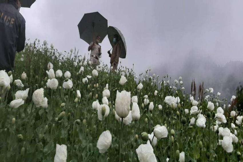 Amid Covid Crisis, Himachal Police Crack Down On Drug Mafia In Mandi, Kullu