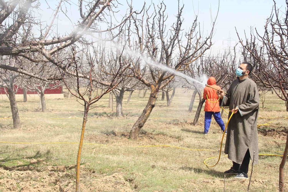 For 3 Successive Years Apple Produce In Kashmir Takes A Hit