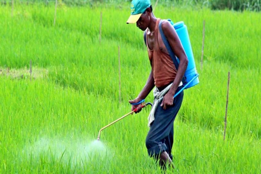 Govt Hikes Subsidy On DAP Fertiliser By 140%; Farmers To Get It At Old Rate