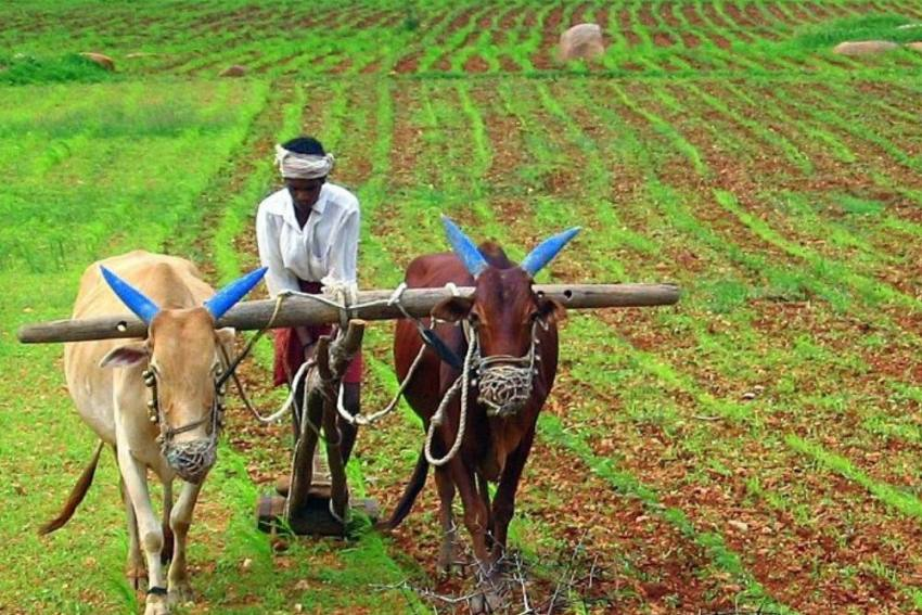 A Nutrition Sensitive Approach To Agriculture In India