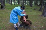 Ladakh Makes Negative RT-PCR Test Report Mandatory For All Inbound Travellers