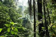 One Among Nature: Protecting Our Ecosystems