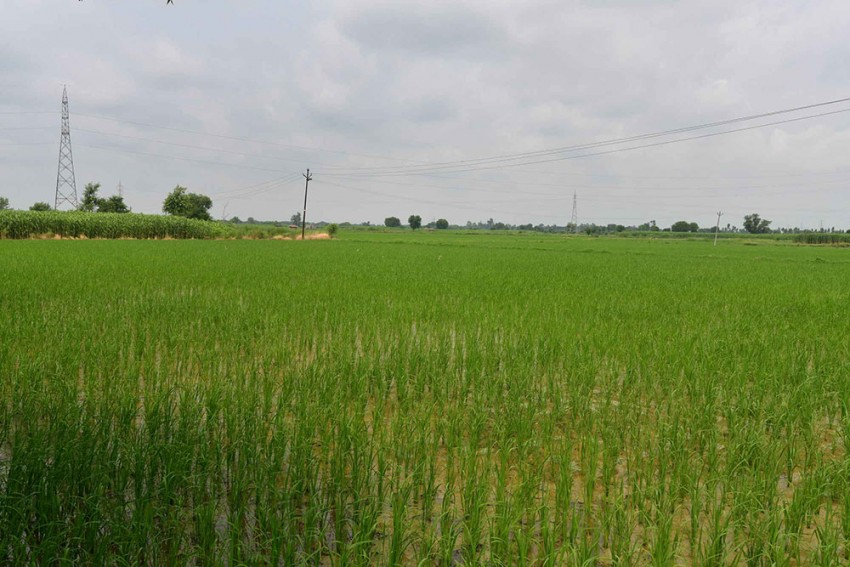 Subsidy Not The Solution For Fertiliser Price Hike: Farmer Unions