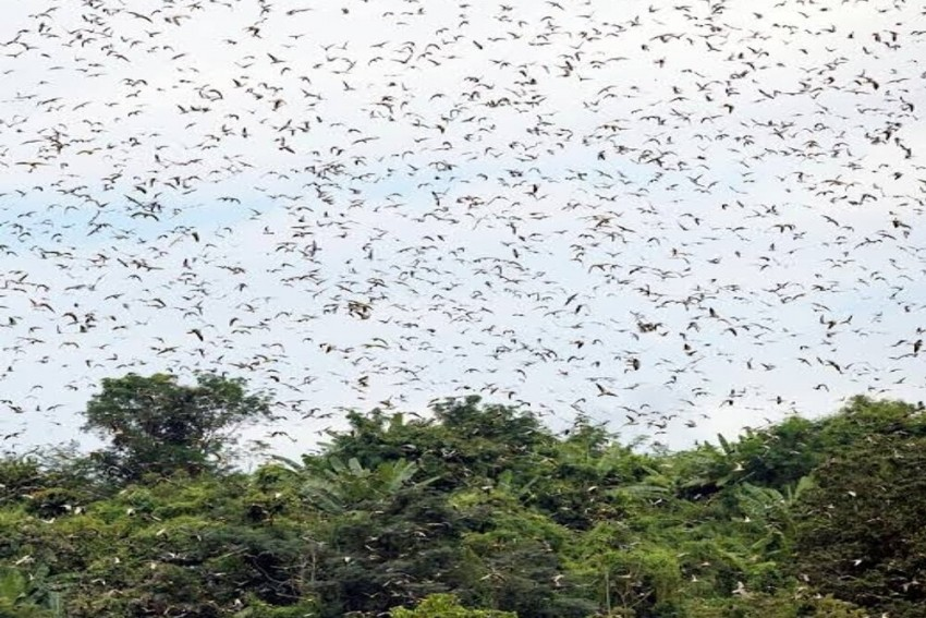How A  Grassroots Conservationist Turned A Naga Village Into A Biodiversity Peace Corridor