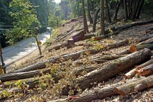 HC Stays Permission On Tree Felling In Shimla
