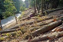 HC Stays Permission On Tree Felling In Shimla