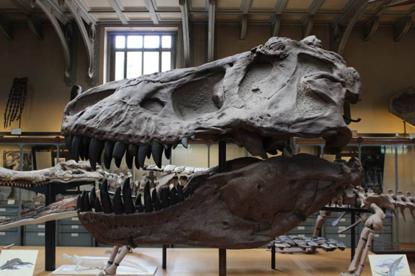 Sauropod Dinosaurs Fossils Dating Back A 100-Million Years Unearthed In Meghalaya