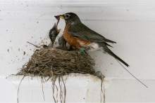 Scientists To Trace Bird Migration With Tech