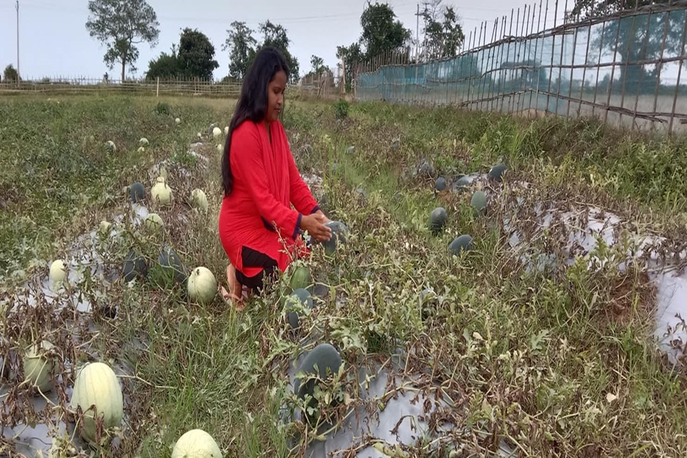 The Inspiring Story Of Assam's Nabanita Organic Farm