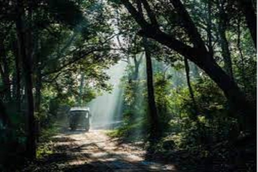 Corbett Tiger Reserve Opens For Round-The-Year Tourism