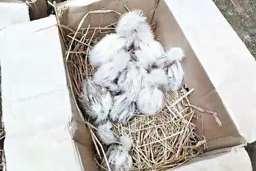 Nesting Site Turns Kill Zone