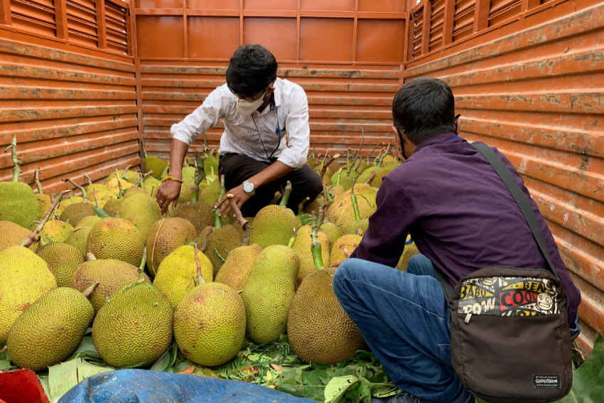 In A First, Tripura To Export Jackfruit To Germany After London And Dubai