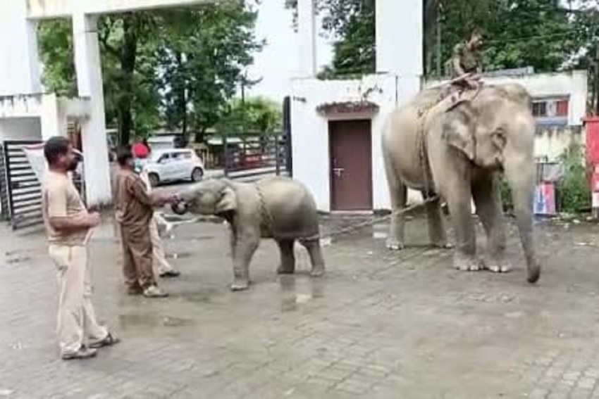 Assam Cops Seize Elephant For Killing A 14-Year-Old Boy