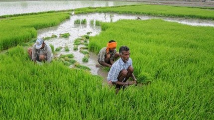 The Himachal Bank Will Conserve Indigenous Organic Seeds
