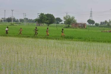 Organic Farming For Sustainable Agriculture And Food Systems In India