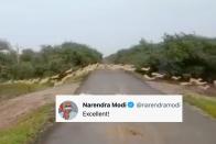 'Excellent' Video of 3,000 Blackbucks Crossing Road Leaves PM Modi Impressed