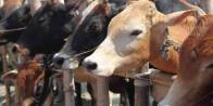 BJP Minister In Meghalaya Recommends Beef Over Chicken, Mutton And Fish
