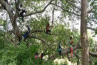 Tree Top Education In Tamil Nadu: Connectivity Issues Force Students To Climb Trees To Attend Online Classes
