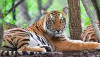 10 Year Old Male Tiger Found Dead At Ranthambore National Park